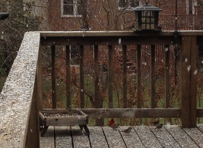Birds enjoying the snow, including a cardinal (the Virginia state bird).