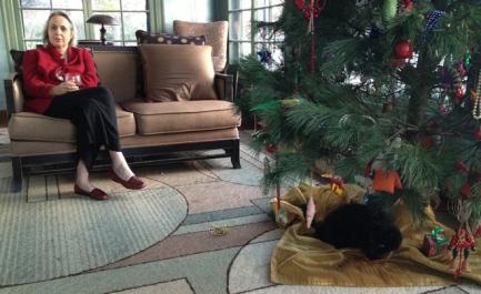 Mason's cat, Charlie, disassembling the Christmas tree.