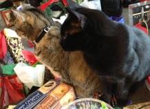 Curious kitties!