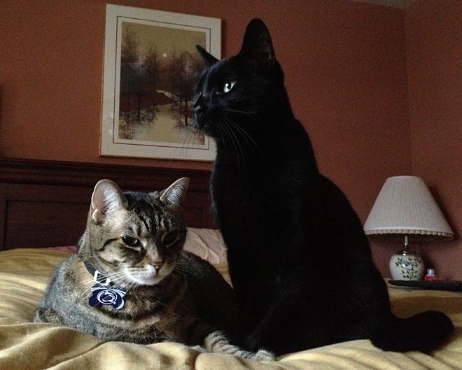 Mom's sweet cats, Sabrina and Sebastian.