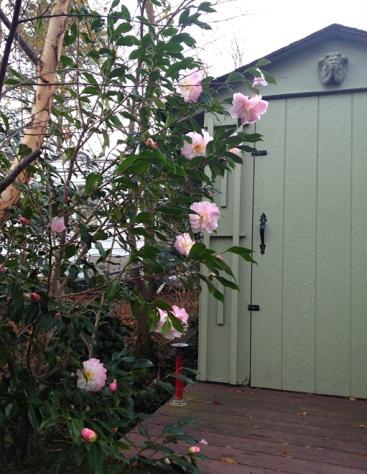 The McClures' secret garden.