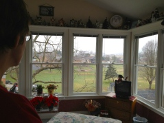 Kitty watching the snow start to fall.