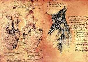 "Leonardo da Vinci ""Anatomical drawing of hearts and blood vessels from Quaderni di Anatomia vol 2; folio 3v""     http://www.art-prints-on-demand.com/kunst/leonardo_da_vinci/Anatomical_drawing_of-hearts_and_blood_Leonardo_da_Vinci-1.jpg"
