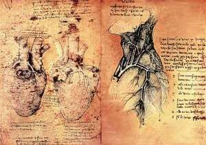 "Leonardo da Vinci ""Anatomical drawing of hearts and blood vessels from Quaderni di Anatomia vol 2; folio 3v""     http://www.art-prints-on-demand.com/kunst/leonardo_da_vinci/Anatomical_drawing_of-hearts_and_blood_Leonardo_da_Vinci-1.jpg"