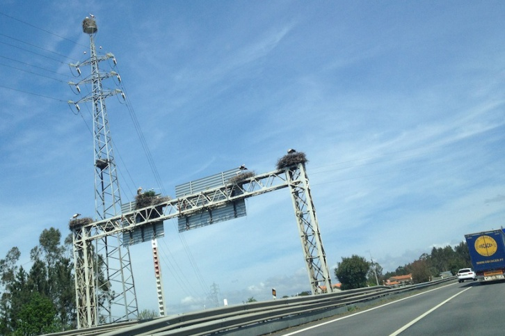 Our drive to Agueda was also full of sites, because bird nesting is encouraged along the highway here.
