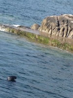 And Dalkey also has two little harbors. The seals like to play in Dalkey Harbor.