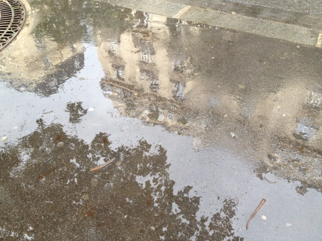 Reflection in a puddle.