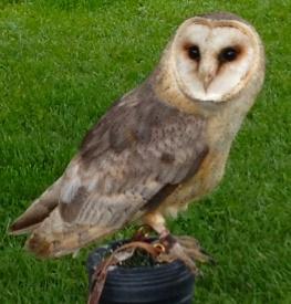 ...and 'hoo' doesn't love owls? (Except for small furry rodents, of course!)